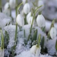 Vytvořme si jaro v zimě
